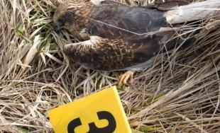 Našli ďalších päť kusov uhynutých vtákov, hodnota dravcov je viac ako 6 tisíc eur